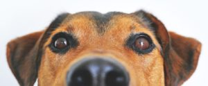 doggo looking into camera