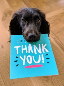 puppy holding thank you card